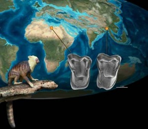 Earliest Known Human Ancestors Came from Asia