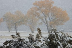 GALLERY PHOTO: Winter Scene, Steamboat Healing Center