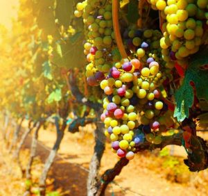 """Spiritual Work in the Vineyards of God"""