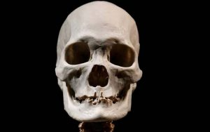 """""""Sweeping gene survey reveals new facets of evolution"""""""