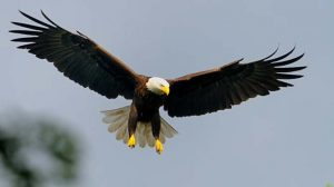 """""""Eagle and Phoenix, Material and Spiritual"""""""